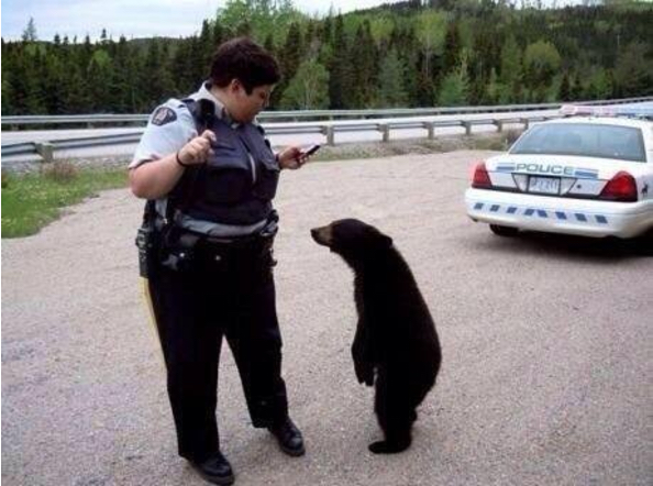 Cop and Bear
